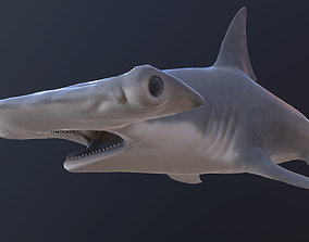 hammerhead shark 3D asset animated