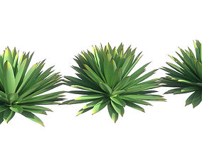 Agave angustifolia 3D model