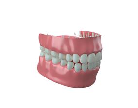 Gums and Teeth 3D model