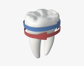 Tooth molars with arrows 02 3D model