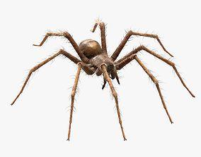 Domestic Spider - Tegenaria Domestica 3D asset animated
