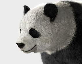 3D Panda with realistic fur