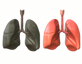 Lungs Human Smoker vs Non Smoker 3D model