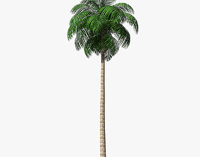 3D asset Palm Tree 02 Low Poly