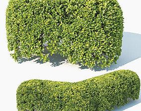 3D Buxus Sempervirens Nr8 oval hedge 50cm