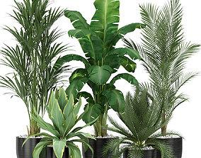 3D Plants collection 349