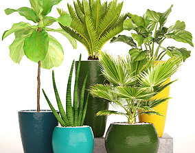 Collection tropical plants 3D model