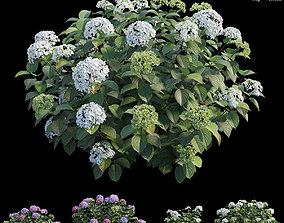 3D Hydrangea Plant set 32
