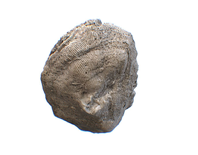 Coral HD 3D asset
