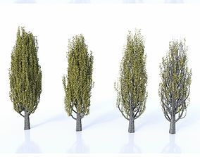 3D Poplar Set Seasons