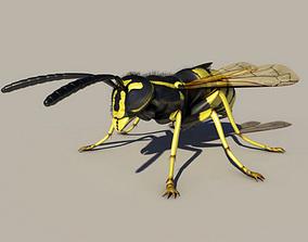 Wasp Vespula 3D