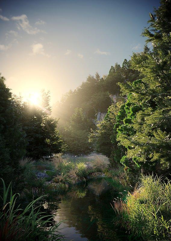 evning forest