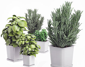 Potted kitchen plants set 3D