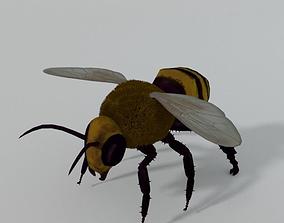 3D asset African Bee