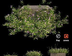 3D Grass collection 02
