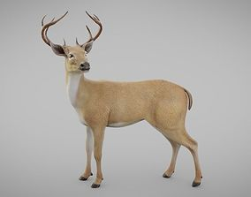 Free Animal 3D Models   CGTrader