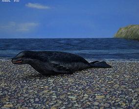 Leopard Seal Hydrurga Leptonyx 3D model