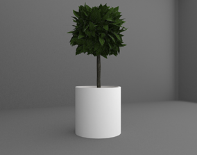 3D model Indoor plant tree