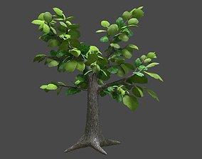 3D asset Sagwan tree