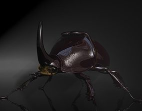 3D asset Rhinoceros Beetle RIGGED