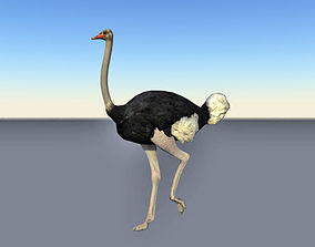 3D asset low-poly Animated cycle walking ostrich