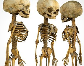 3D model Foetus Skeleton