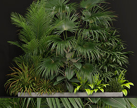 3D Plants collection 197