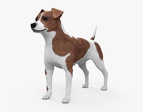 3D model Jack Russell Terrier HD