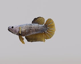 animals 3D Betta Fish