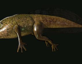 Edible Frog Tadpole 3D asset