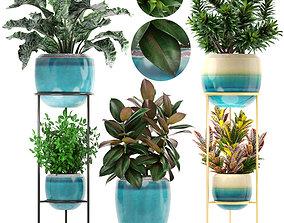 3D Collection plants tradescantia