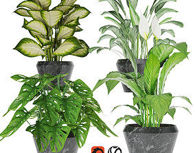 Collection plant one 3D