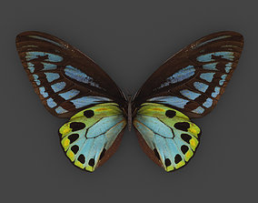 BFLY-004 Butterfly 3D