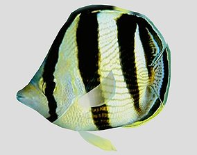 Banded Butterfly Fish 3D model