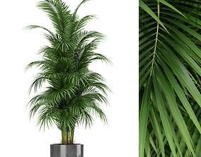 Plants collection 176 3D