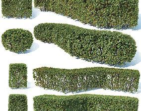 3D model Cotoneaster lucidus 5 hedges collection