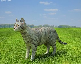 Domestic Cat Felis catus 3D asset