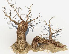 Dry Tree 04 3D