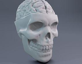 Skull with brain 3D print model