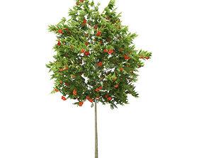 3D model European Rowan Sorbus aucuparia 4m