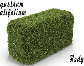 3D model Hedge Box