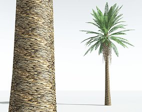 EVERYPlant Date Palm LowPoly 02 --10 Models-- realtime