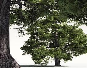3D EVERYPlant English Oak 07 -- 10 Models