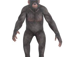 Chimpanzee 3D asset