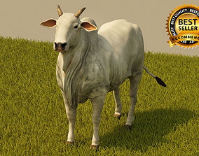 3D Cattle