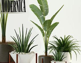 3D model Plants collection 76 Modernica pots
