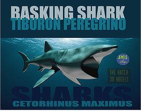 Basking Shark 3D