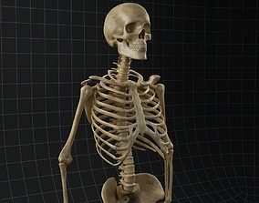 3D Anatomy skeleton 02