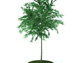 3D model Green Garden Plant