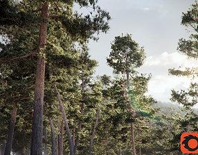 Pinus Syluestriformis Pack of 12 Pines 3Ds MAX Corona 1